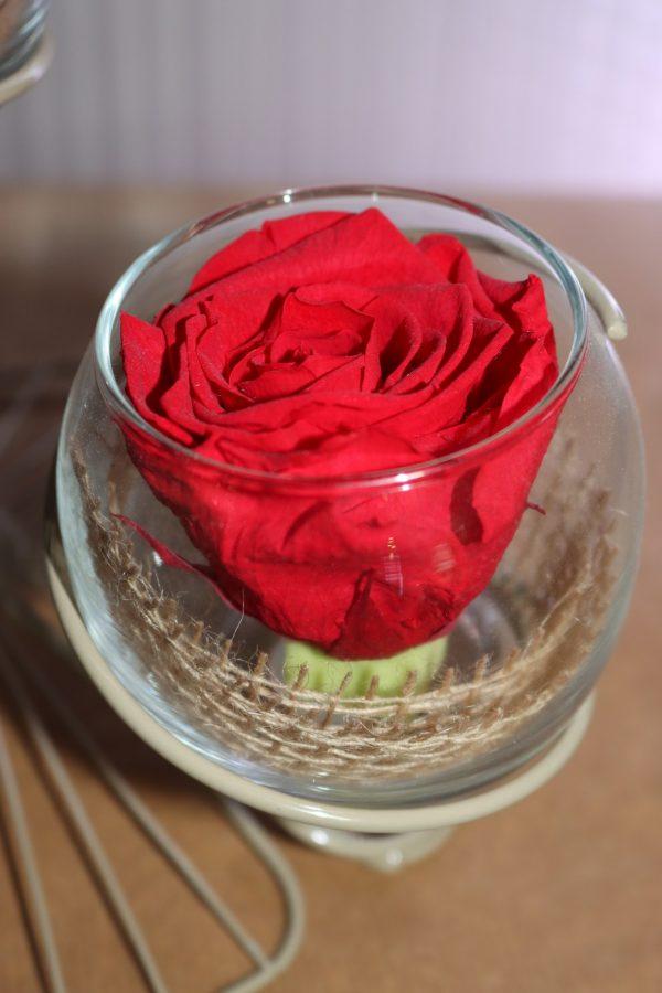 Duo Rose éternelle rouge éole beige toile de jute