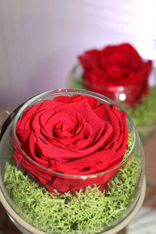 Duo Rose éternelle rouge éole beige sur lit de mousse