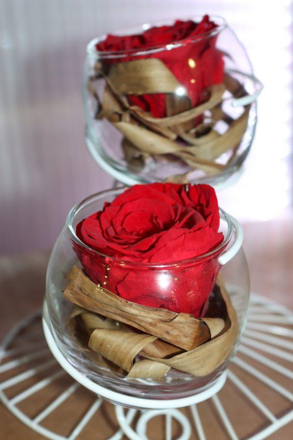 Duo Rose éternelle rouge éole blanche écorce