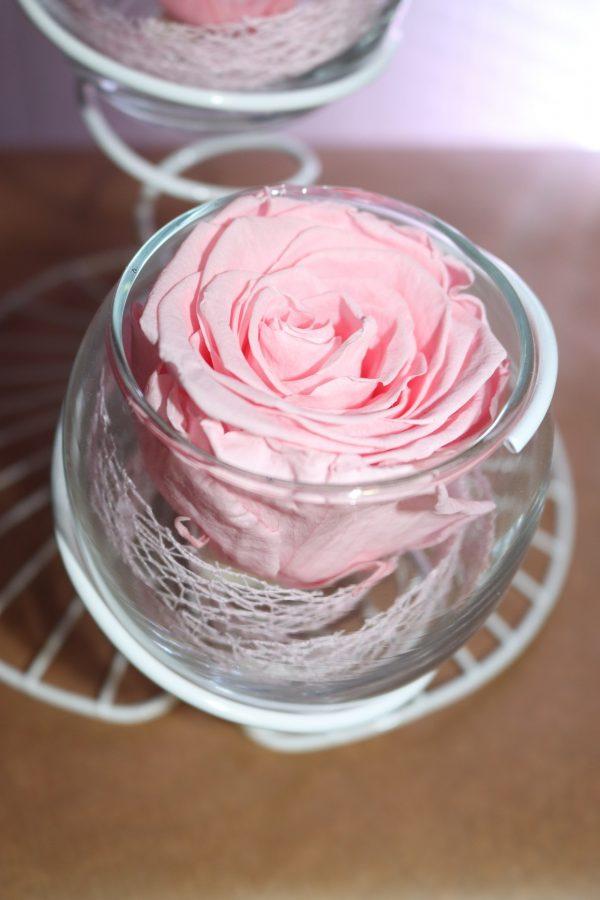 Duo rose éternelle rose pale éole blanche