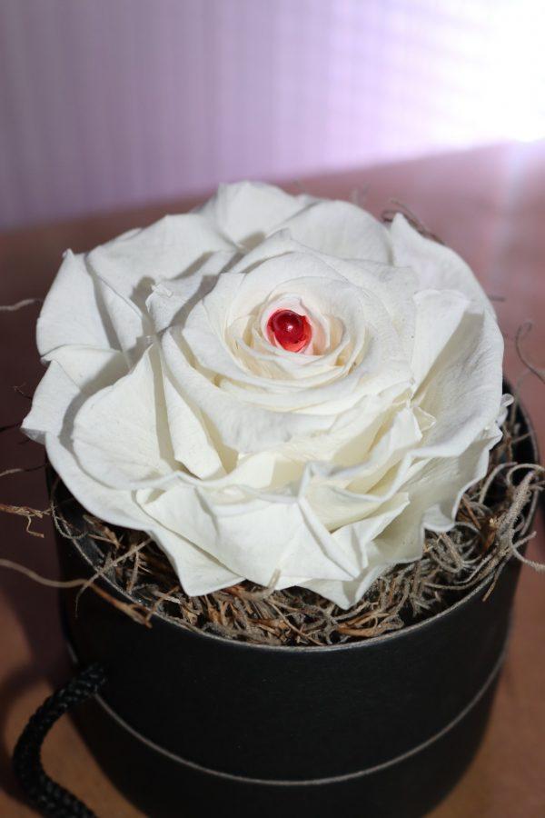 Rose éternelle blanche boite à chapeau