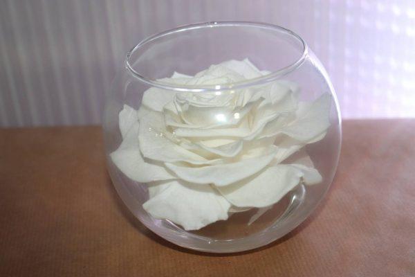 Rose éternelle blanche bulle