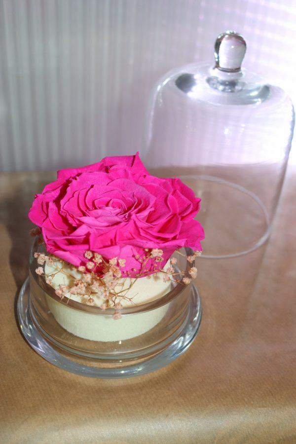 Rose éternelle fuschia fleurette sous cloche