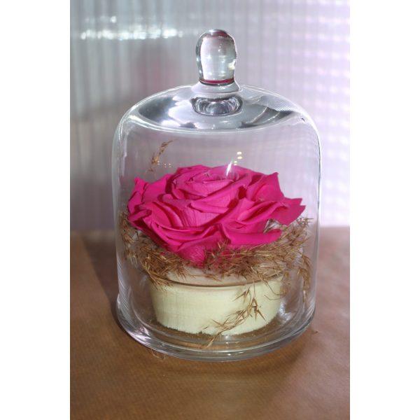 Rose éternelle fuschia sous cloche décors champètre