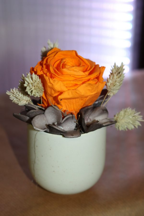 Rose éternelle orange en pot arrondi