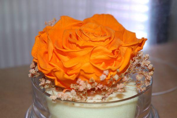 Rose éternelle orange et ses fleurettes sous cloche
