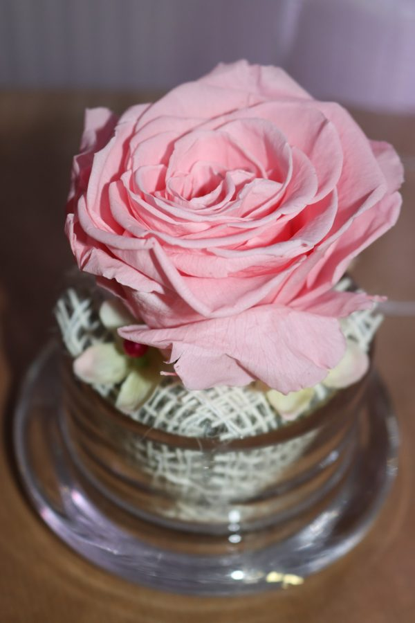 Rose éternelle rose claire sous cloche façon cupcake petit modèle
