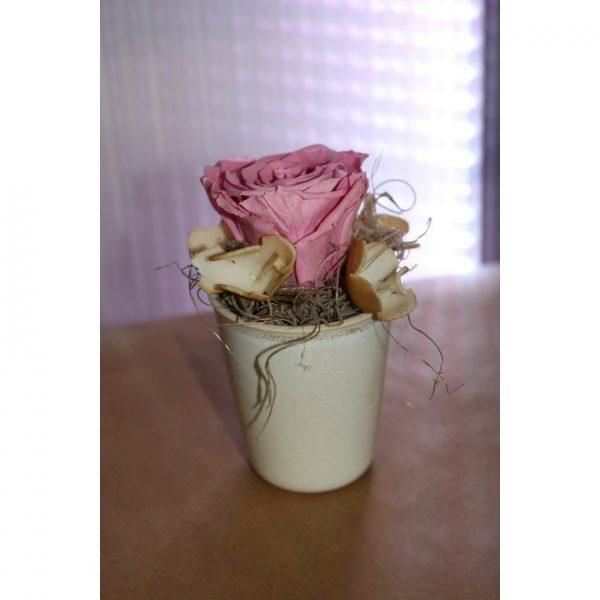 Rose éternelle rose en pot