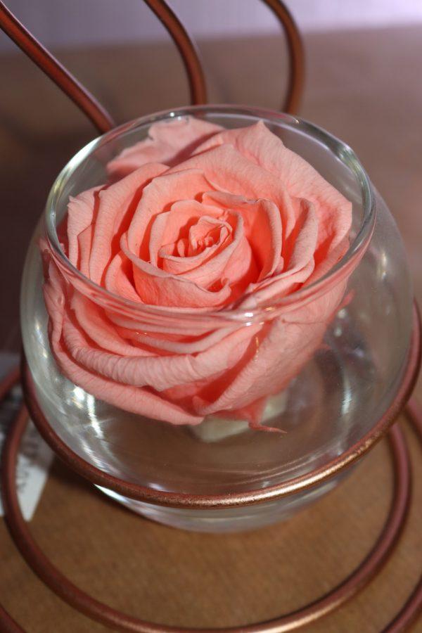 Rose éternelle rose flamme cuivrée
