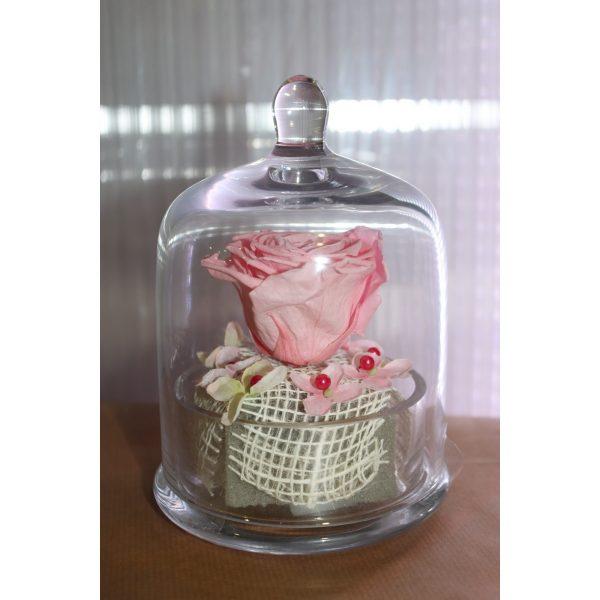 Rose éternelle rose sous cloche façon cupcake modèle moyen