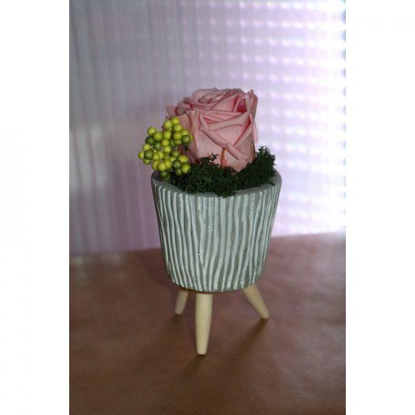 Rose éternelle rose tendre en pot sur pied