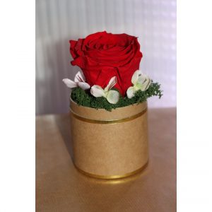 Rose éternelle rouge en pot doré