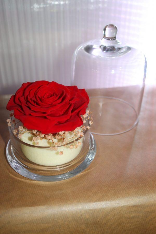Rose éternelle rouge sous cloche décors champêtre grand modèle