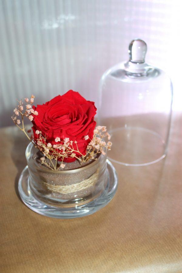 Rose éternelle rouge sous cloche décors champêtre modèle moyen