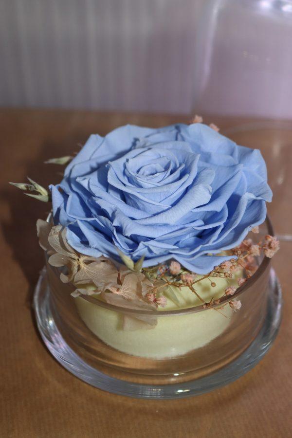 Rose éternelles bleu sous cloche