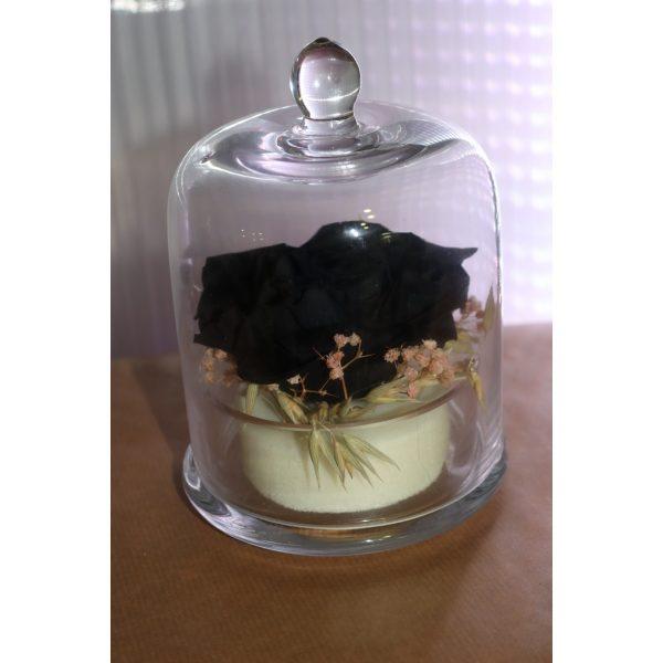 Rose éternelles noir et ses fleurettes sous cloche