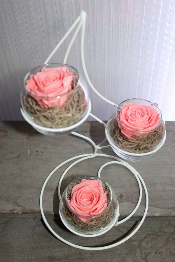 trio roses éternelles rose flamme blanche